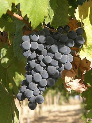 Vini Abruzzesi in vendita online su Grandi Bottiglie